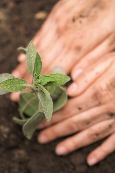 Manos-Sustentabilidad-3